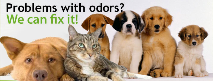 Pet Odor Problems